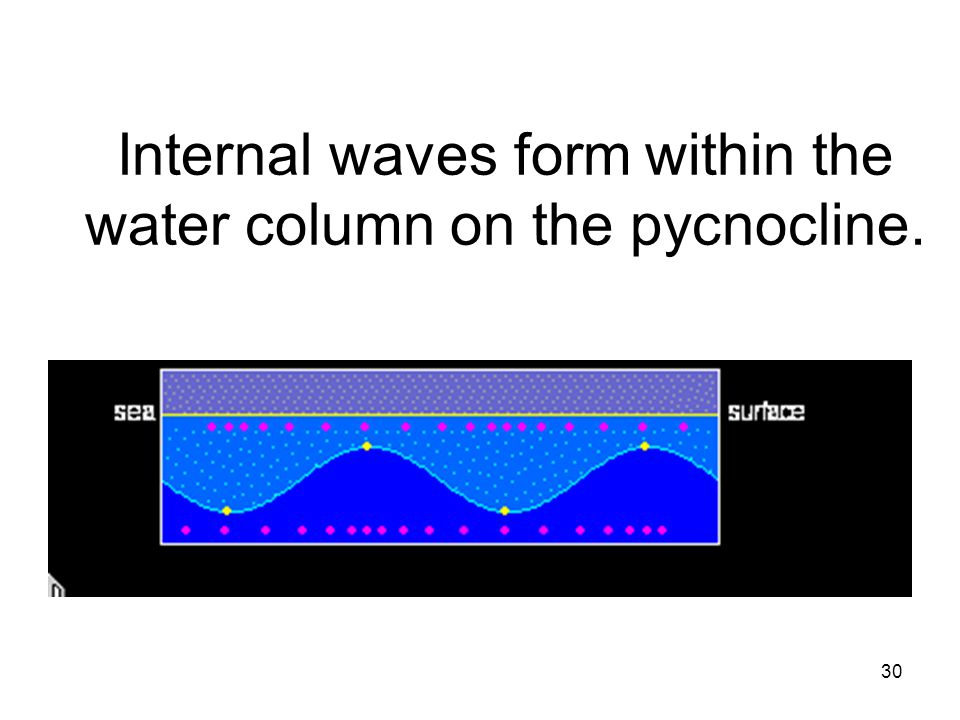30 Internal waves form within the water column on the pycnocline.