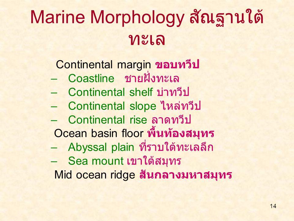 14 Marine Morphology สัณฐานใต้ ทะเล Continental margin ขอบทวีป –Coastline ชายฝั่งทะเล –Continental shelf บ่าทวีป –Continental slope ไหล่ทวีป –Continen