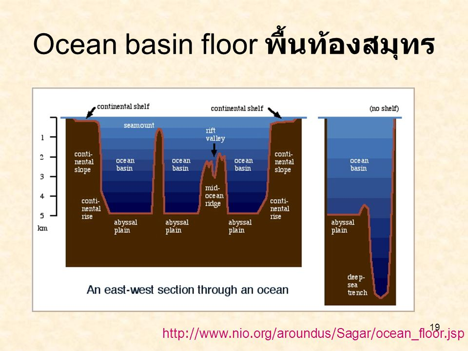 19 Ocean basin floor พื้นท้องสมุทร http://www.nio.org/aroundus/Sagar/ocean_floor.jsp