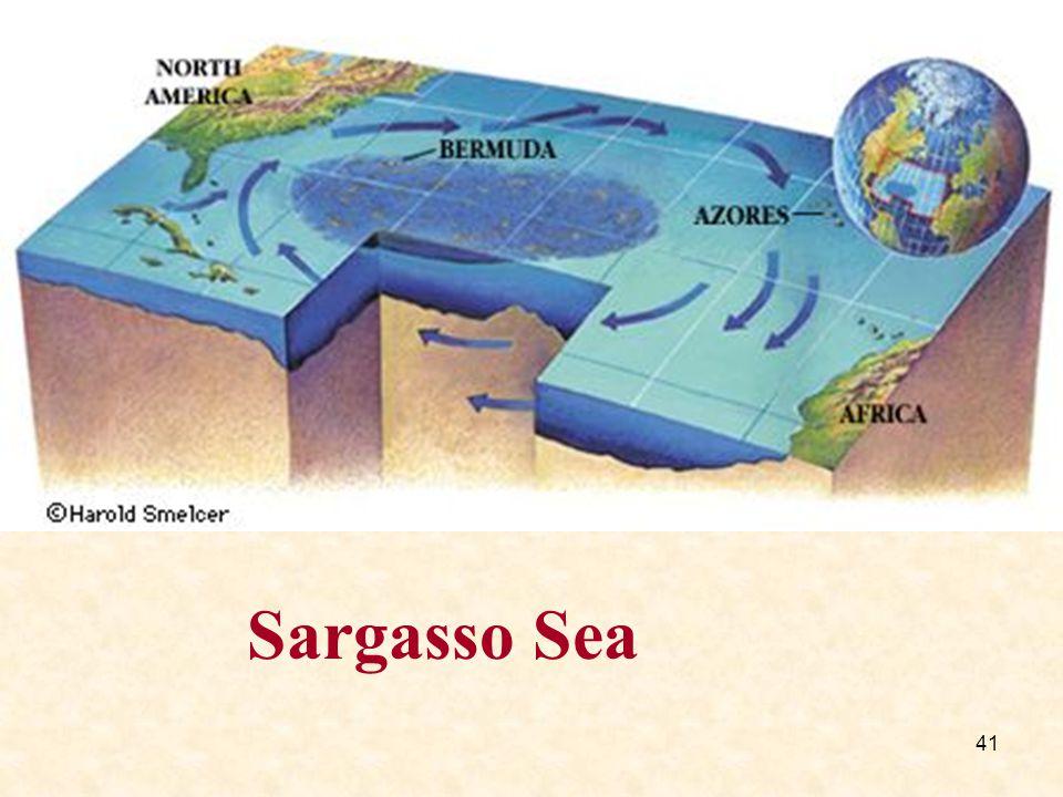 41 Sargasso Sea