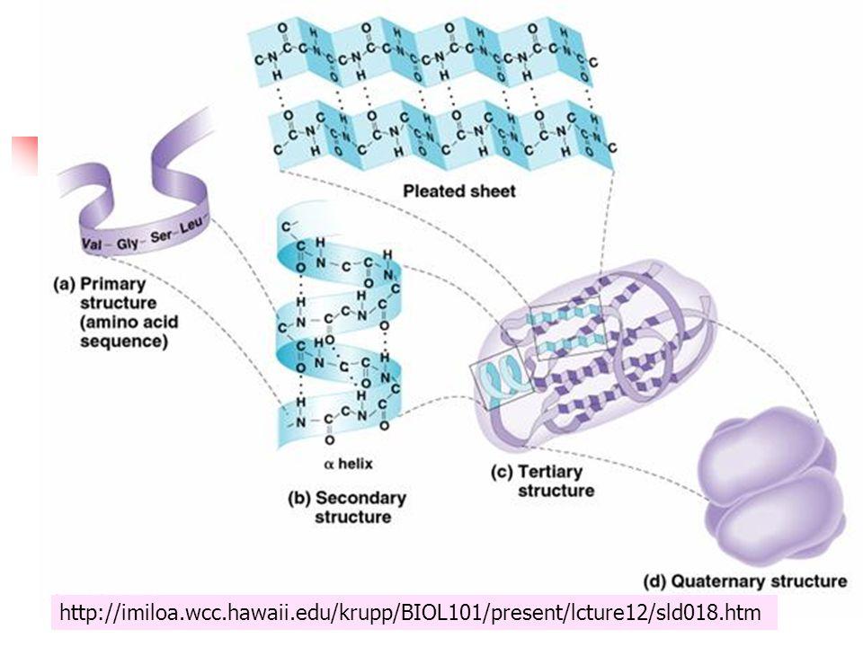 http://imiloa.wcc.hawaii.edu/krupp/BIOL101/present/lcture12/sld018.htm