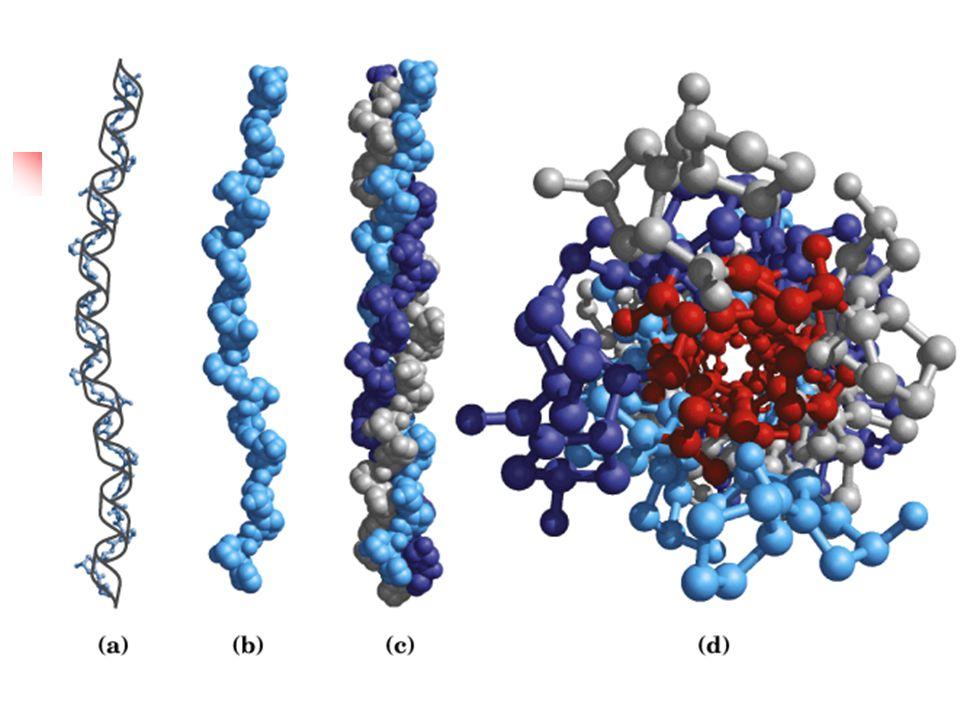 หน้าที่ของโปรตีน Structure proteins Contractill proteins Catalytic proteins Hormonal proteins Natural –drfrnes proteins Blood proteins Transport proteins Respirator proteins Receptor proteins Ribosomal proteins Toxin proteins Vision proteins