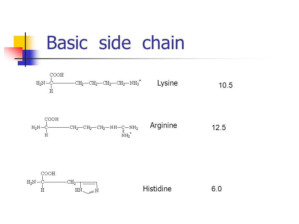 Basic side chain Lysine Arginine Histidine 10.5 12.5 6.0