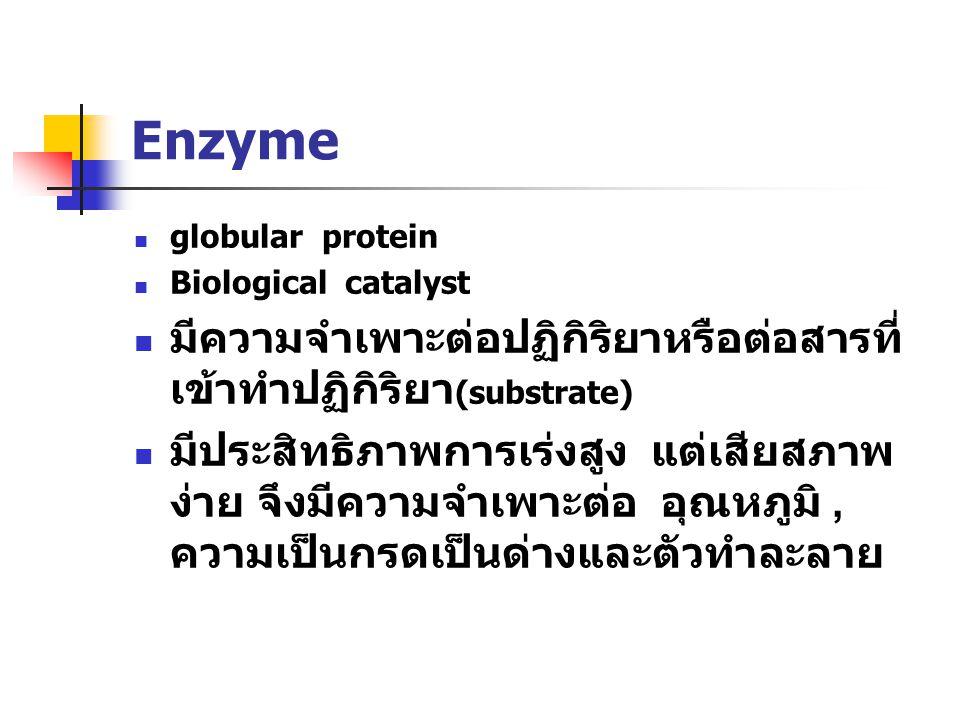 Enzyme globular protein Biological catalyst มีความจำเพาะต่อปฏิกิริยาหรือต่อสารที่ เข้าทำปฏิกิริยา (substrate) มีประสิทธิภาพการเร่งสูง แต่เสียสภาพ ง่าย