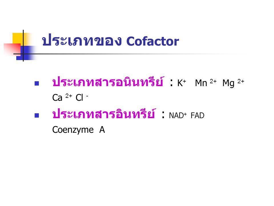 ประเภทของ Cofactor ประเภทสารอนินทรีย์ : K + Mn 2+ Mg 2+ Ca 2+ Cl - ประเภทสารอินทรีย์ : NAD + FAD Coenzyme A