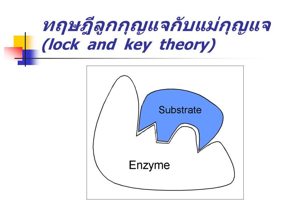 ทฤษฎีชักนำ (induced-fit theory)