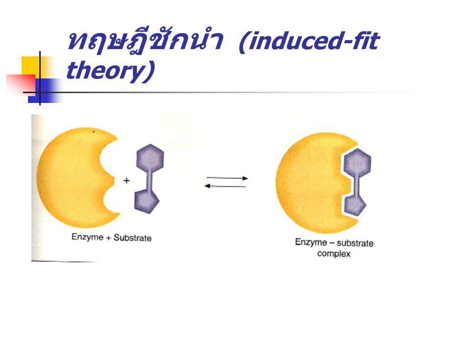 การที่เอนไซม์จับกับ substrate จะต้อง มีปัจจัยต่อไปนี้ ทิศทางเหมาะสม enzyme-substrate complex จะต้องสลายตัว ได้ง่าย สภาพแวดล้อมจะต้องเข้ากับบริเวณเร่ง ของเอนไซม์