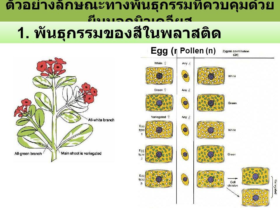 ตัวอย่างลักษณะทางพันธุกรรมที่ควบคุมด้วย ยีนนอกนิวเคลียส 1.