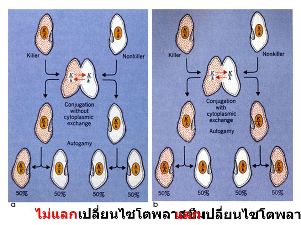 ไม่แลกเปลี่ยนไซโตพลาสซึม แลกเปลี่ยนไซโตพลาสซึม