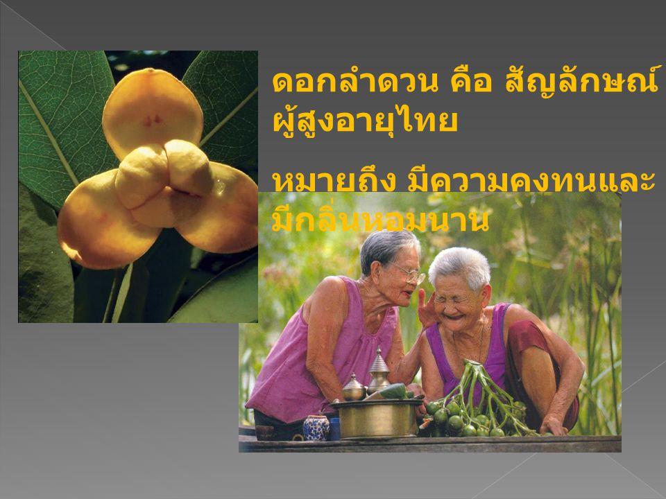ดอกลำดวน คือ สัญลักษณ์ ผู้สูงอายุไทย หมายถึง มีความคงทนและ มีกลิ่นหอมนาน