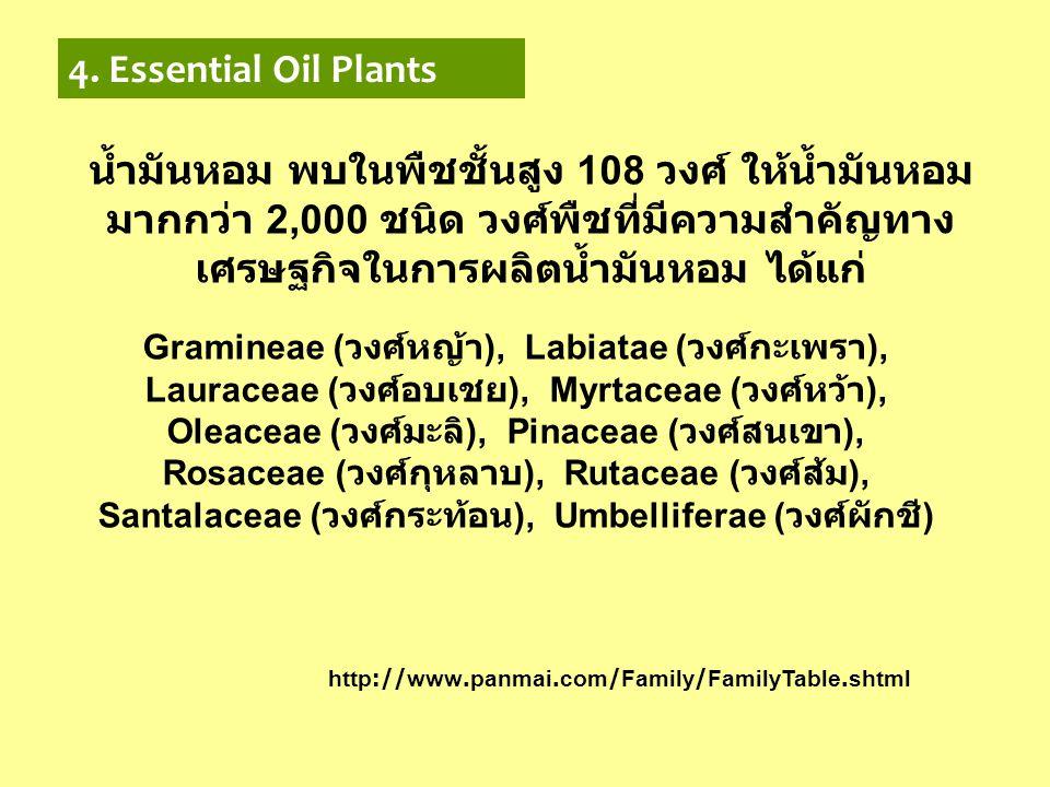4. Essential Oil Plants น้ำมันหอม พบในพืชชั้นสูง 108 วงศ์ ให้น้ำมันหอม มากกว่า 2,000 ชนิด วงศ์พืชที่มีความสำคัญทาง เศรษฐกิจในการผลิตน้ำมันหอม ได้แก่ G
