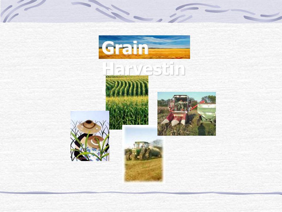 Grain Harvestin g