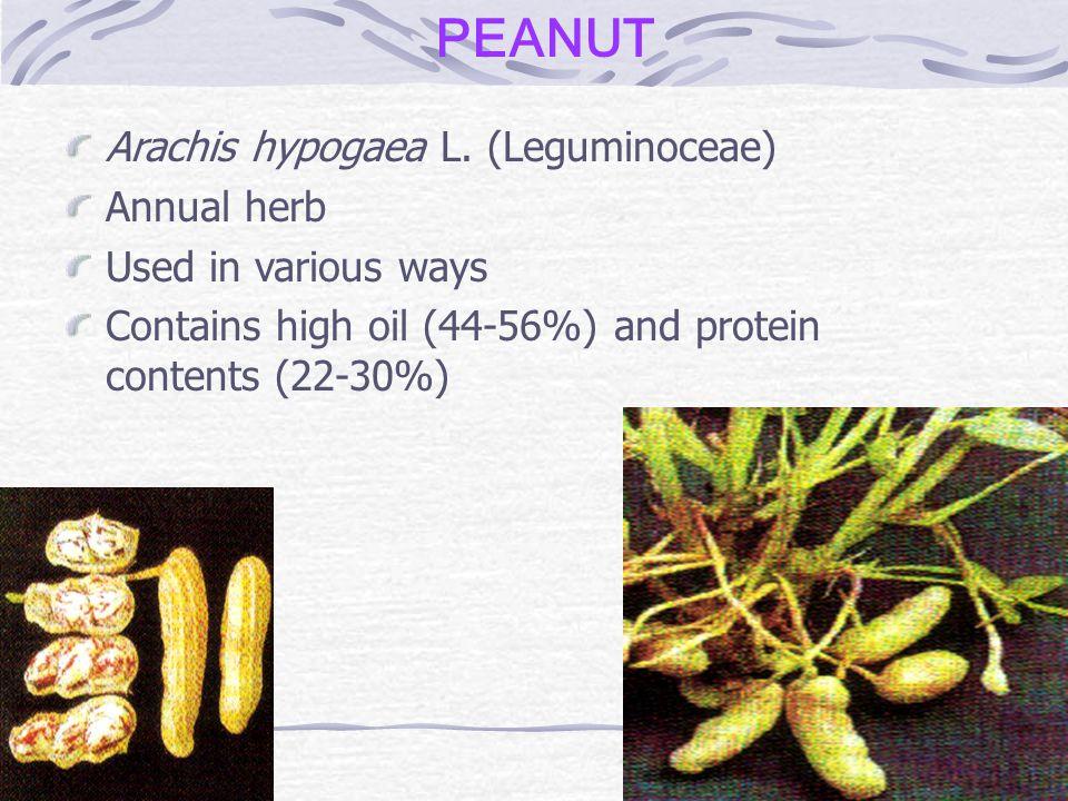 PEANUT Arachis hypogaea L.