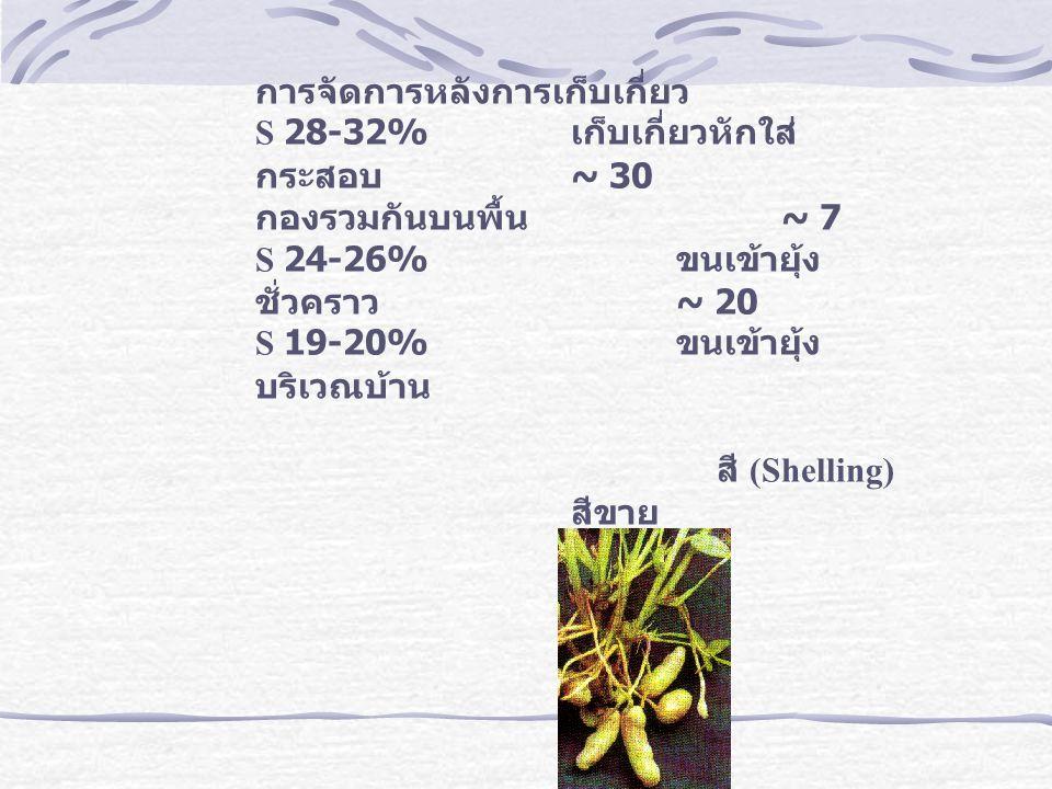 การจัดการหลังการเก็บเกี่ยว S 28-32% เก็บเกี่ยวหักใส่ กระสอบ ~ 30 กองรวมกันบนพื้น ~ 7 S 24-26% ขนเข้ายุ้ง ชั่วคราว ~ 20 S 19-20% ขนเข้ายุ้ง บริเวณบ้าน สี (Shelling) สีขาย