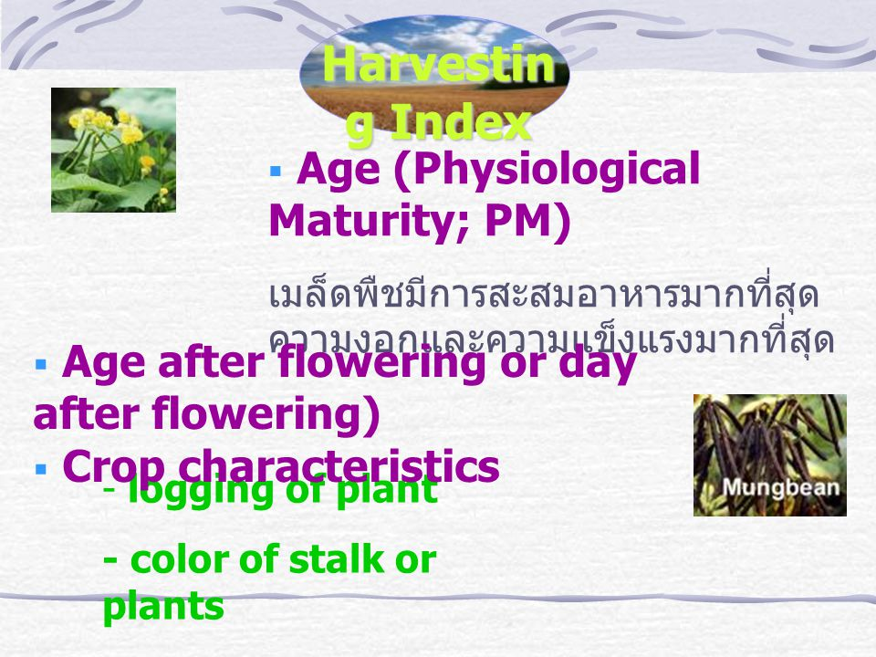 Harvestin g Index  Age (Physiological Maturity; PM) เมล็ดพืชมีการสะสมอาหารมากที่สุด ความงอกและความแข็งแรงมากที่สุด - logging of plant - color of stalk or plants - color of pod or grains  Age after flowering or day after flowering)  Crop characteristics