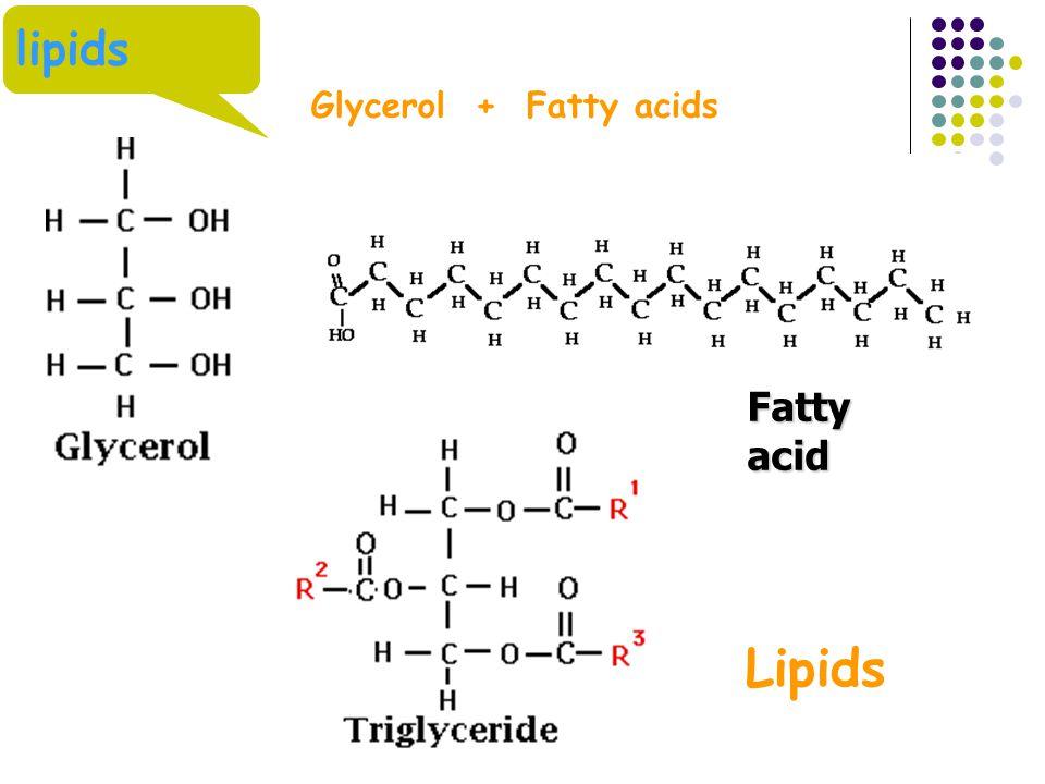 Fatty acid lipids Glycerol + Fatty acids Lipids