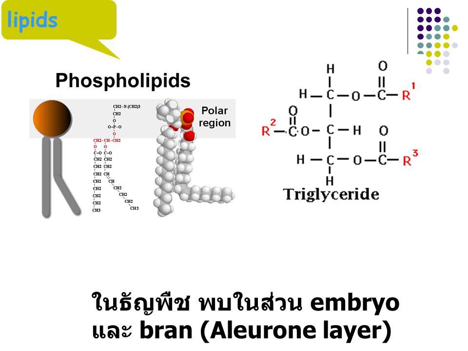 lipids ในธัญพืช พบในส่วน embryo และ bran (Aleurone layer)