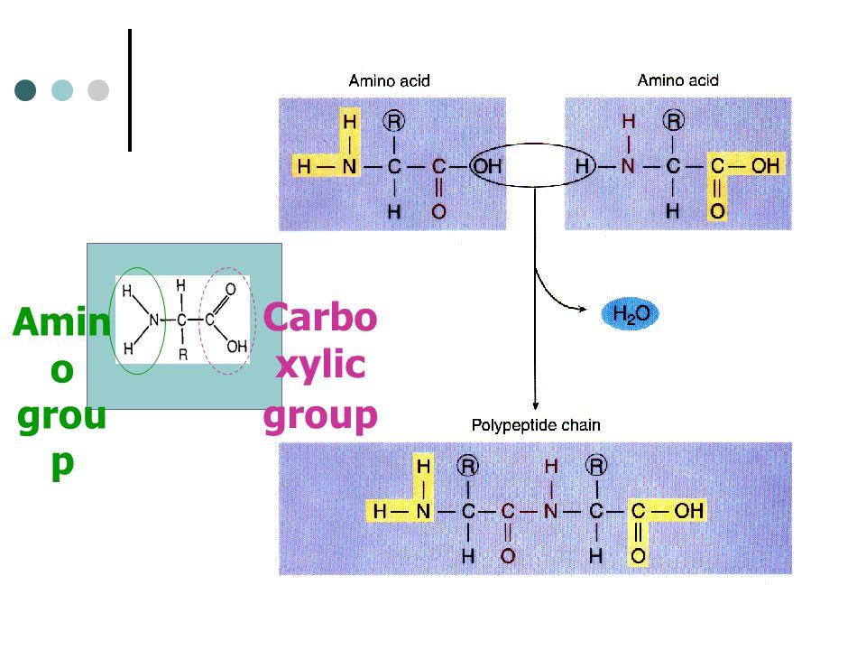 Amin o grou p Carbo xylic group