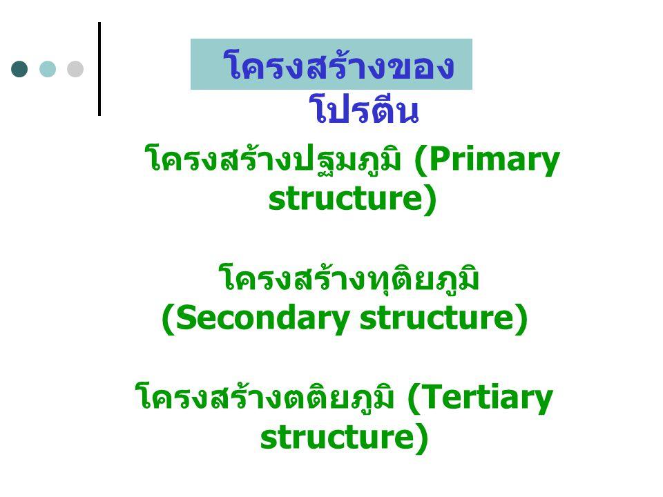 โครงสร้างของ โปรตีน โครงสร้างปฐมภูมิ (Primary structure) โครงสร้างทุติยภูมิ (Secondary structure) โครงสร้างตติยภูมิ (Tertiary structure) โครงสร้างจตุร