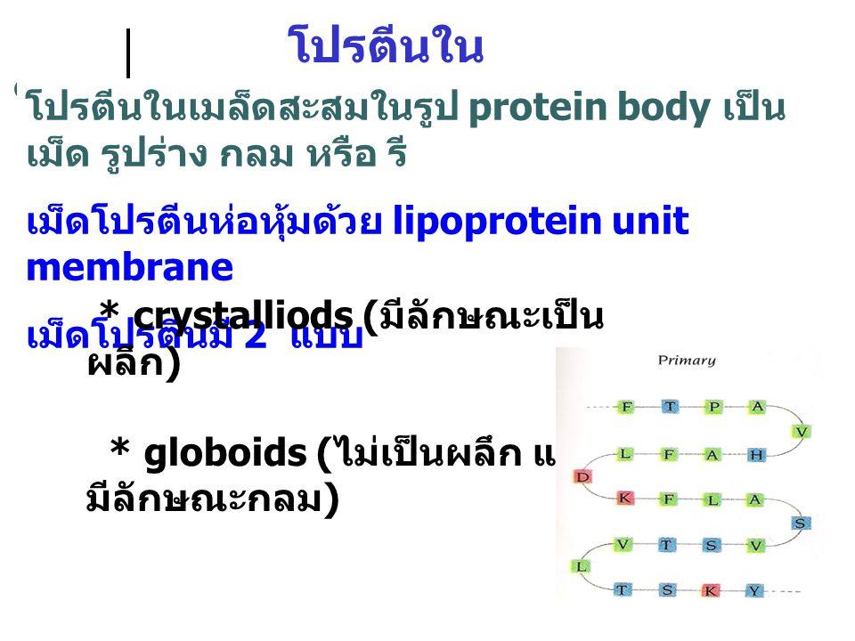 โปรตีนใน เมล็ดพืช โปรตีนในเมล็ดสะสมในรูป protein body เป็น เม็ด รูปร่าง กลม หรือ รี เม็ดโปรตีนห่อหุ้มด้วย lipoprotein unit membrane เม็ดโปรตีนมี 2 แบบ