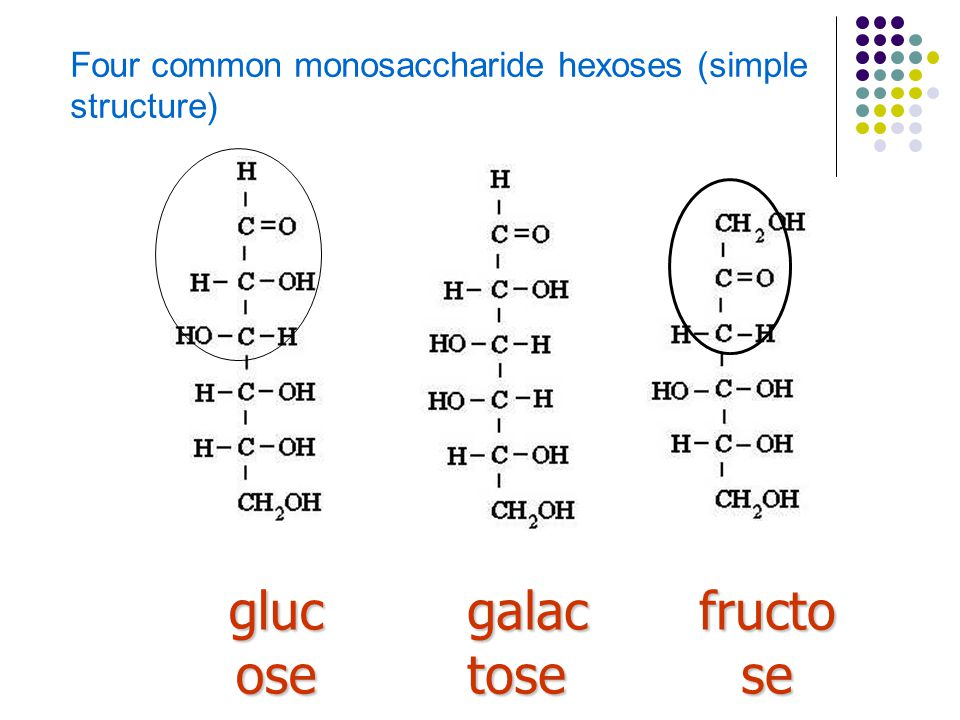 Four common monosaccharide hexoses (simple structure) gluc ose galac tose fructo se