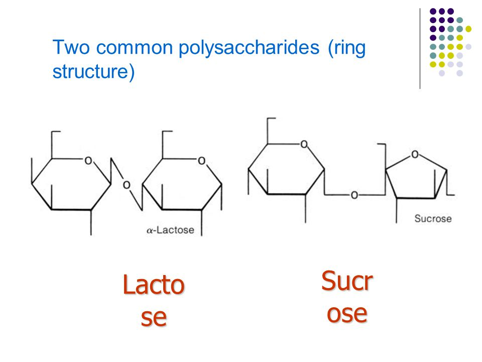 Two common polysaccharides (ring structure) Lacto se Sucr ose