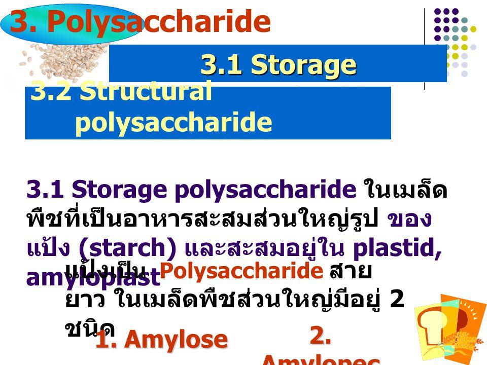 3.1 Storage polysaccharide ในเมล็ด พืชที่เป็นอาหารสะสมส่วนใหญ่รูป ของ แป้ง (starch) และสะสมอยู่ใน plastid, amyloplast แป้ง เป็น Polysaccharide สาย ยาว ในเมล็ดพืชส่วนใหญ่มีอยู่ 2 ชนิด 1.