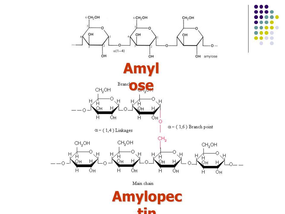 Amyl ose Amylopec tin