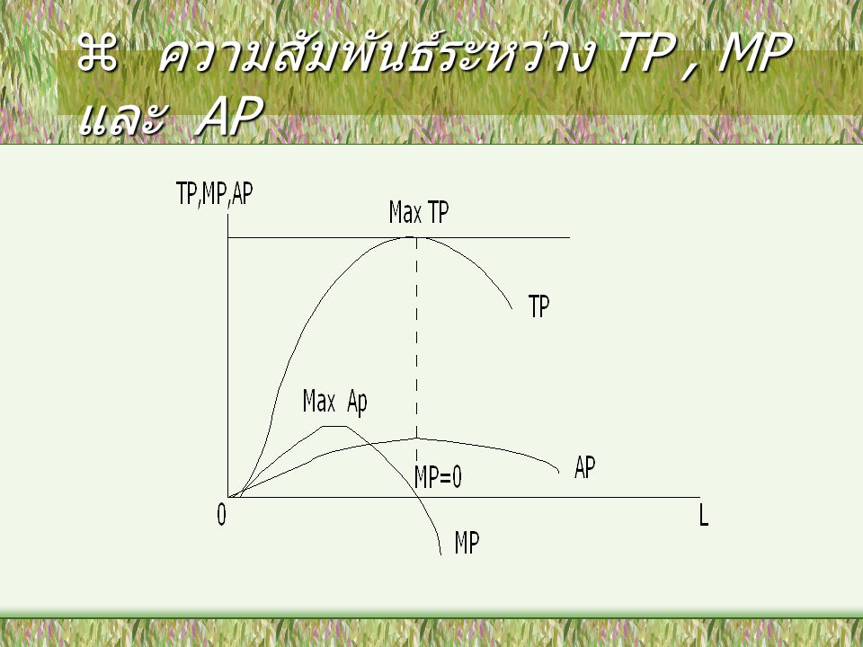  ความสัมพันธ์ระหว่าง TP, MP และ AP (continued) TP & MP : Max TP, MP = 0 AP & MP : –AP increase, when MP > AP –AP decrease, when MP < AP