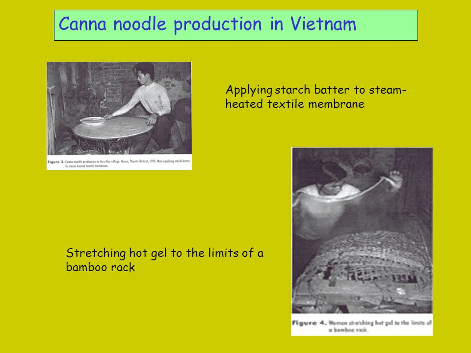 Canna noodle production in Vietnam Applying starch batter to steam- heated textile membrane Stretching hot gel to the limits of a bamboo rack