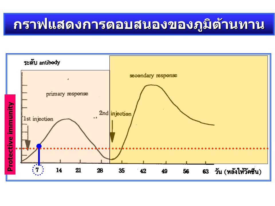 Protective immunity กราฟแสดงการตอบสนองของภูมิต้านทาน