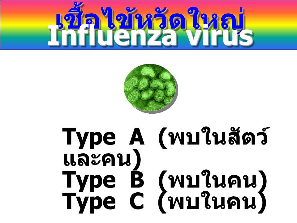 Type A ( พบในสัตว์ และคน ) Type B ( พบในคน ) Type C ( พบในคน ) Type A ( พบในสัตว์ และคน ) Type B ( พบในคน ) Type C ( พบในคน ) เชื้อไข้หวัดใหญ่ Influen