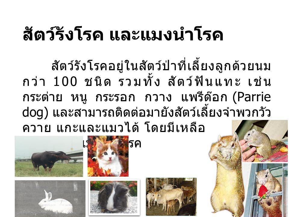 สัตว์รังโรค และแมงนำโรค สัตว์รังโรคอยู่ในสัตว์ป่าที่เลี้ยงลูกด้วยนม กว่า 100 ชนิด รวมทั้ง สัตว์ฟันแทะ เช่น กระต่าย หนู กระรอก กวาง แพรีด๊อก (Parrie do