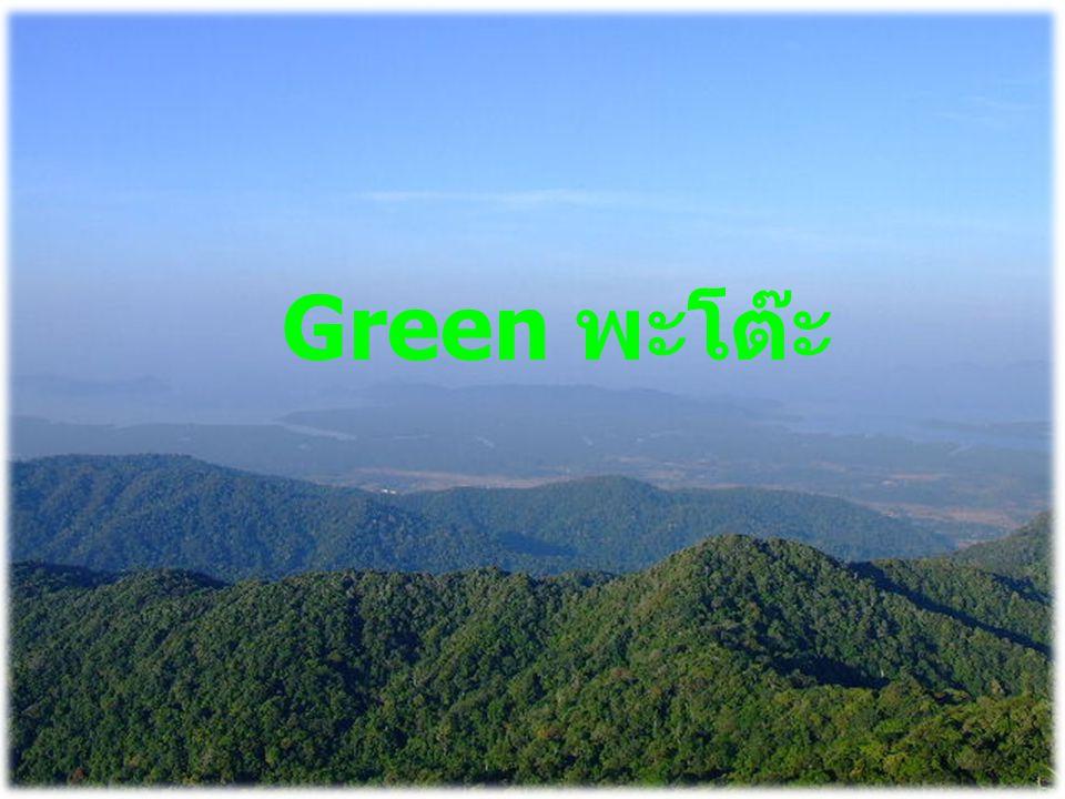 Green พะโต๊ะ