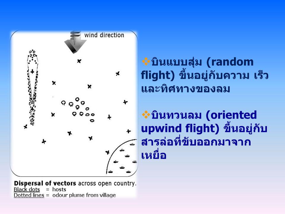  บินแบบสุ่ม (random flight) ขึ้นอยู่กับความ เร็ว และทิศทางของลม  บินทวนลม (oriented upwind flight) ขึ้นอยู่กับ สารล่อที่ขับออกมาจาก เหยื่อ