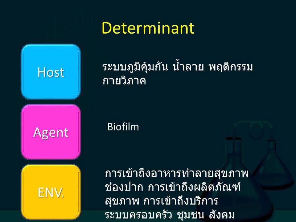 Determinant Host Agent ENV. ระบบภูมิคุ้มกัน น้ำลาย พฤติกรรม กายวิภาค Biofilm การเข้าถึงอาหารทำลายสุขภาพ ช่องปาก การเข้าถึงผลิตภัณฑ์ สุขภาพ การเข้าถึงบ