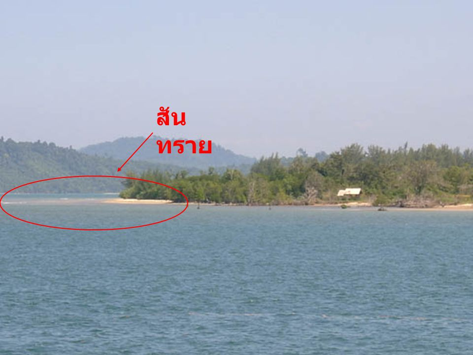 เกาะจง
