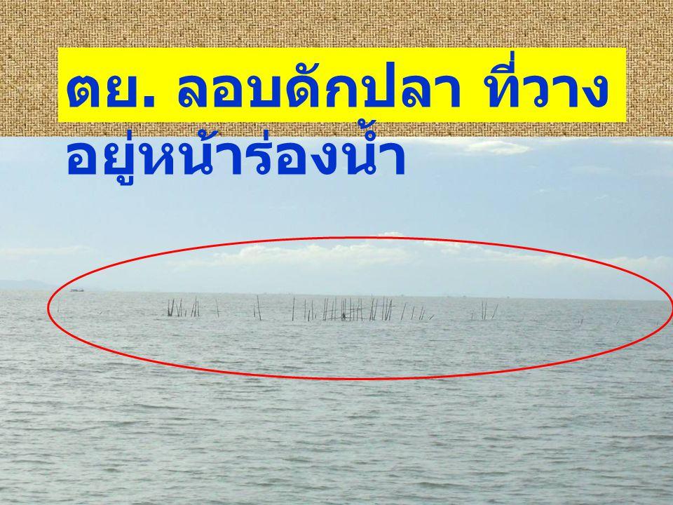 ตย. ลอบดักปลา ที่วาง อยู่หน้าร่องน้ำ