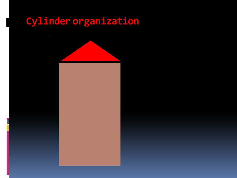 Cylinder organization