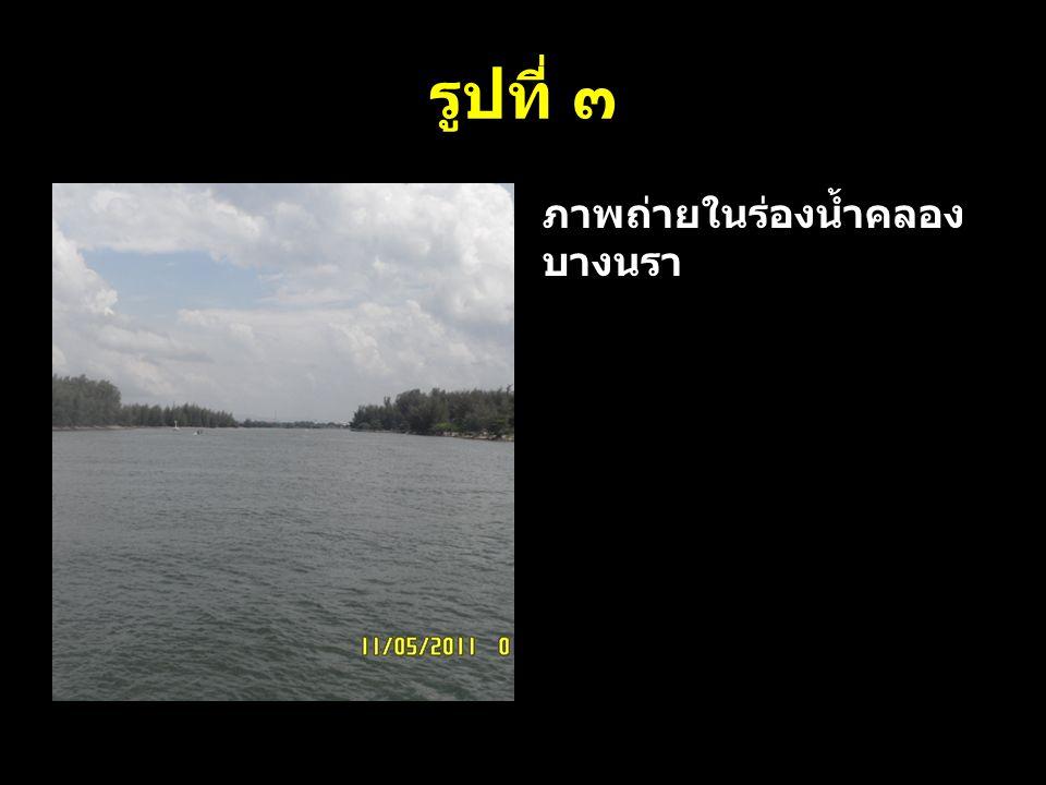 รูปที่ ๓ ภาพถ่ายในร่องน้ำคลอง บางนรา