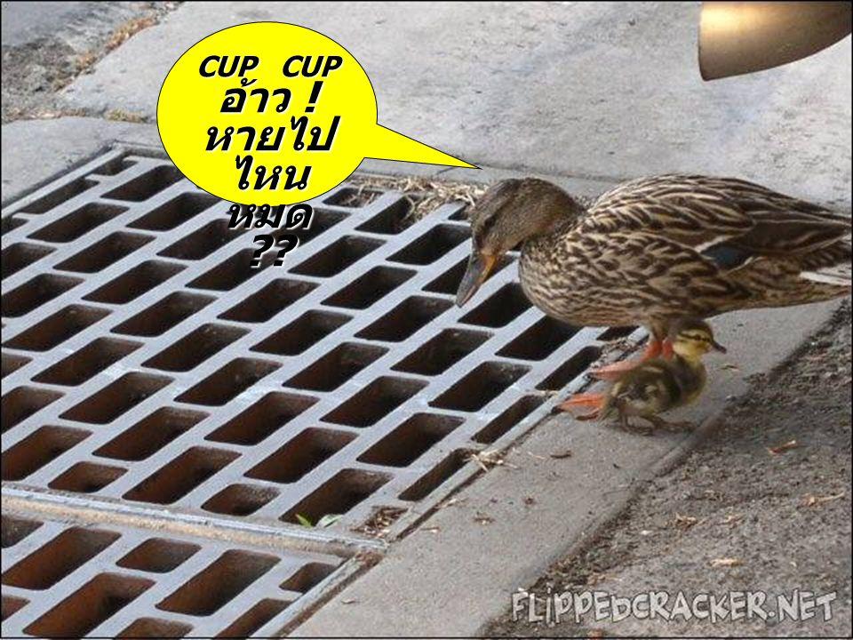 CUP CUP อ้าว ! หายไป ไหน หมด ??