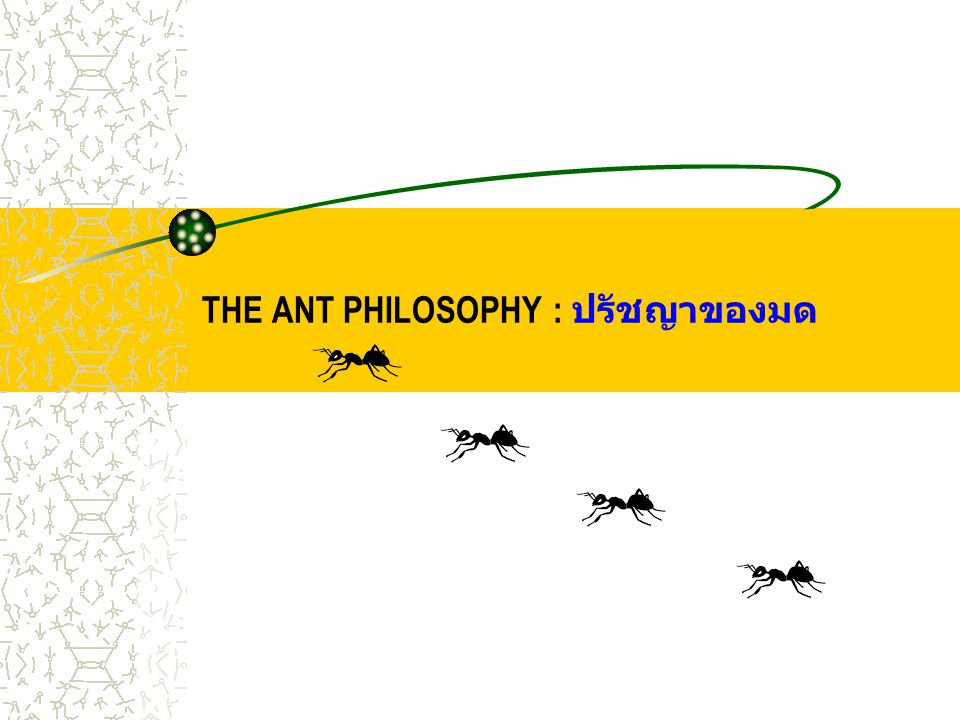 1 st PART PHILOSOPHY: ปรัชญาที่ 1 ANTS NEVER QUIT มดไม่เคยละความพยายาม If they're headed somewhere and you try to stop them, they'll look for another way.