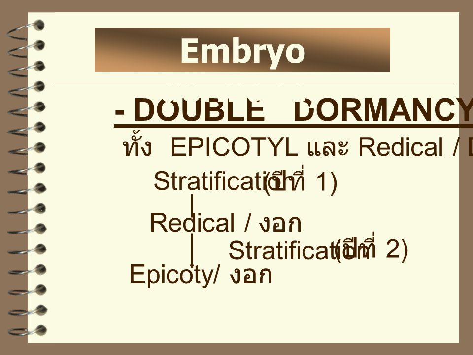 - DOUBLE DORMANCY ทั้ง EPICOTYL และ Redical / Dormant Stratification Redical / งอก Epicoty/ งอก Stratification ( ปีที่ 2) ( ปีที่ 1) Embryo dormancy