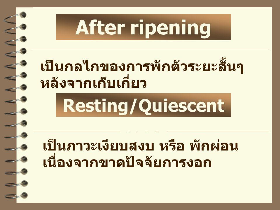เป็นกลไกของการพักตัวระยะสั้นๆ หลังจากเก็บเกี่ยว เป็นภาวะเงียบสงบ หรือ พักผ่อน เนื่องจากขาดปัจจัยการงอก After ripening Resting/Quiescent stage