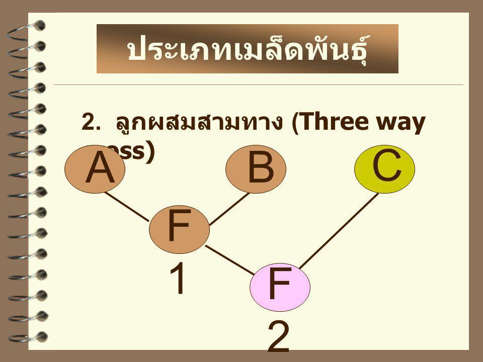 3. ลูกผสมคู่ หรือ ลูกผสมสี่ทาง (Double cross) ประเภทเมล็ดพันธุ์ ลูกผสม F1F1 AB C F2F2 D F1F1