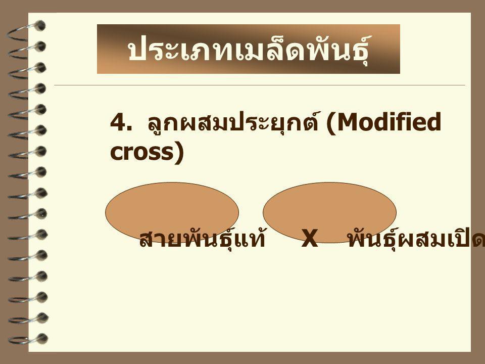 4. ลูกผสมประยุกต์ (Modified cross) สายพันธุ์แท้ X พันธุ์ผสมเปิด ประเภทเมล็ดพันธุ์ ลูกผสม