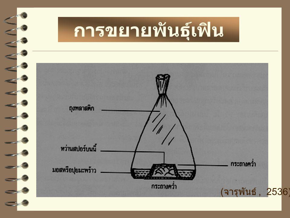 การขยายพันธุ์เฟิน ( จารุพันธ์, 2536)