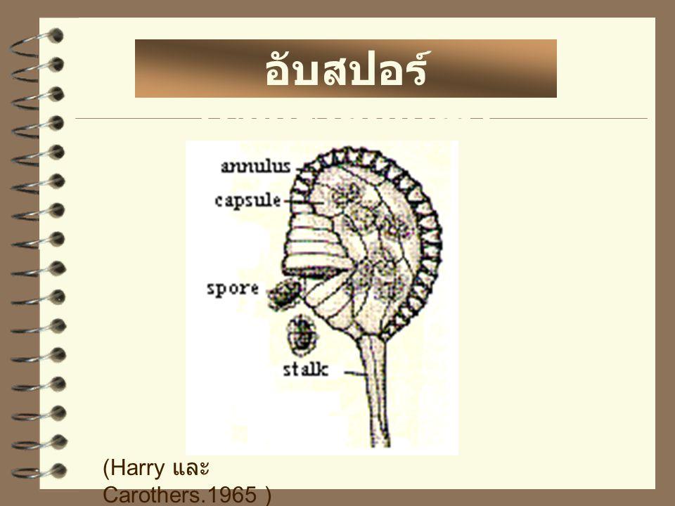 อับสปอร์ (sporangium) (Harry และ Carothers.1965 )