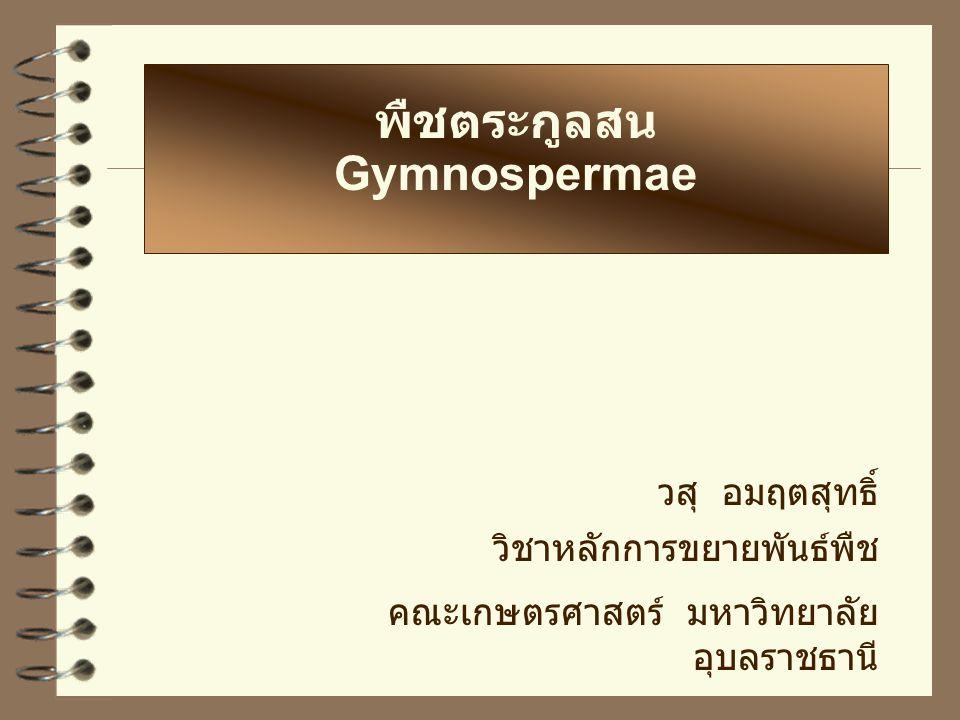 พืชตระกูลสน Gymnospermae วสุ อมฤตสุทธิ์ วิชาหลักการขยายพันธ์พืช คณะเกษตรศาสตร์ มหาวิทยาลัย อุบลราชธานี