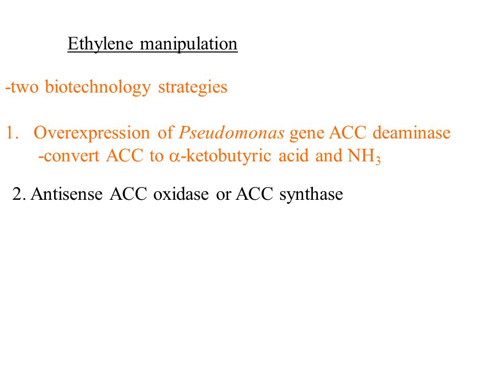 Ethylene manipulation -two biotechnology strategies 1.Overexpression of Pseudomonas gene ACC deaminase -convert ACC to  -ketobutyric acid and NH 3 2.